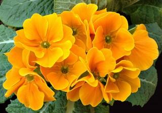 Oriental Medicine helps your Kidney energy bloom in Winter
