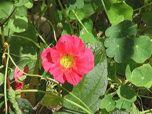 Mandala Blossom